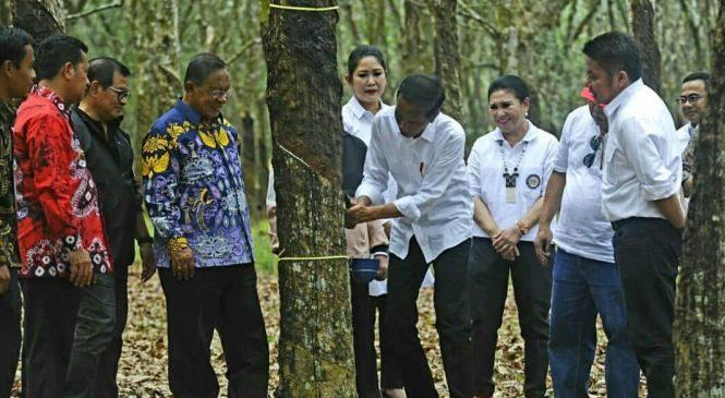 Jokowi Yakin Harga Karet Akan Naik
