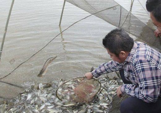 Gubernur Dorong Budidaya Ikan
