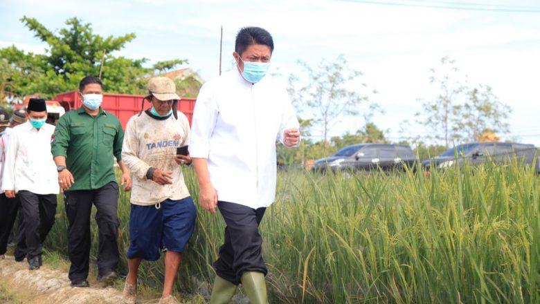 Dongkrak Produktifitas Pertanian, Herman Deru Resmikan Program Listrik Masuk Sawah